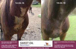 Bilde av Sweet Oil